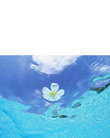 Durance Fleur De Tiare. Фото 3