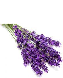 Roland V. Paris Exosens Lavender. Фото 5
