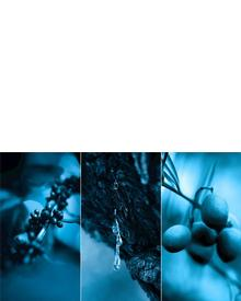 CHANEL Blue Serum. Фото 2