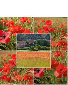 Durance Savon en Fleur with Poppy Extract. Фото 1
