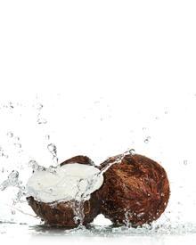 Roland V. Paris Exosens Coconut Coco. Фото 4