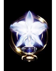 Guerlain Orchidee Imperiale Eye & Lip Cream. Фото 4