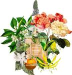 13 ароматных цветов, любимчиков парфюмеров.