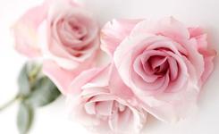 Розовое настроение: Топ 8 продуктов с экстрактом розы