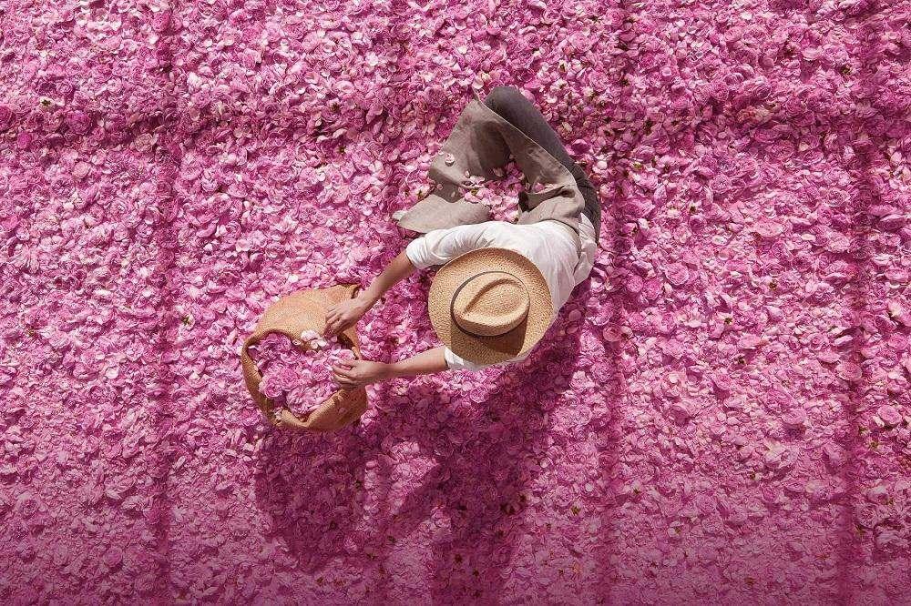 Сюрприз від Dior: новий аромат Miss Dior Rose N'Roses.