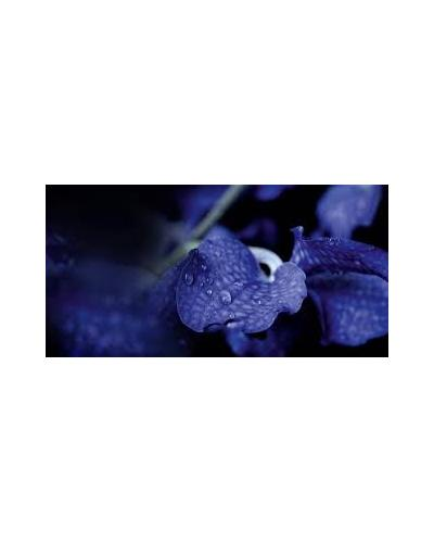 Guerlain Orchidee Imperiale Night Detoxifying Essence. Фото 1