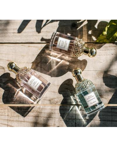 Guerlain Aqua Allegoria Ginger Piccante. Фото 1