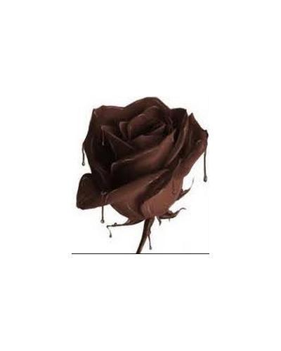 Mancera Roses & Chocolate. Фото 1