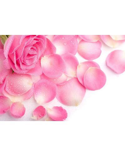 Roland V. Paris Exosens Rose. Фото 5